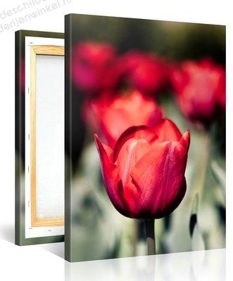 Schilderij Rode Tulpen (75x100cm)