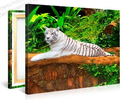Schilderij Witte Tijger (100x75cm)