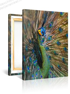Schilderij Pauw Trots (75x100cm)