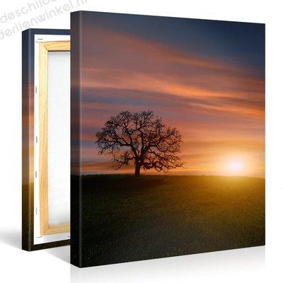 Schilderij Boom Zonsondergang (80x80cm)