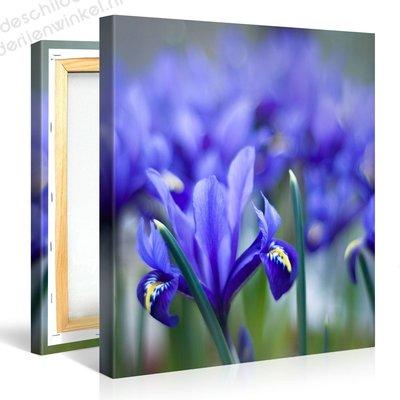 Schilderij Iris Bloem Paars (80x80cm)