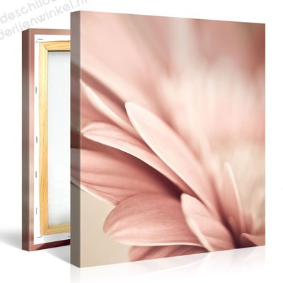 Schilderij Kalmte Roze Bloemblaadjes (80x80cm)