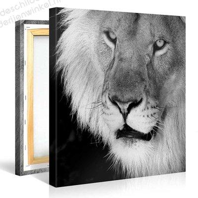 Schilderij Leeuw Zwart Wit (80x80cm)
