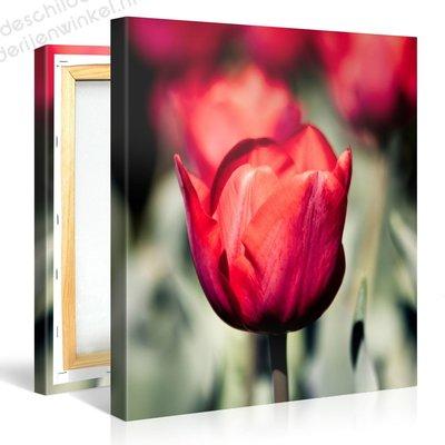 Schilderij Rode Tulpen (80x80cm)