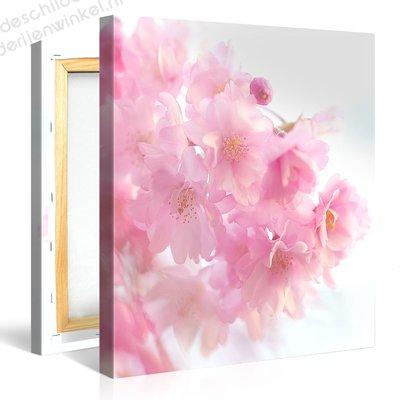 Schilderij Roze Prunusboom (80x80cm)