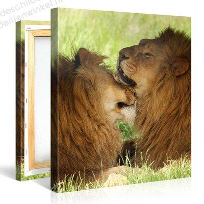 Schilderij Twee Leeuwen (80x80cm)