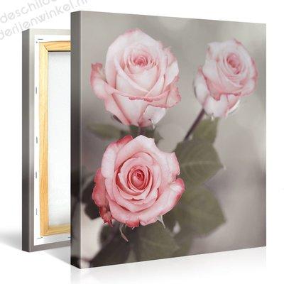 Schilderij Drie Roze Rozen (80x80cm)