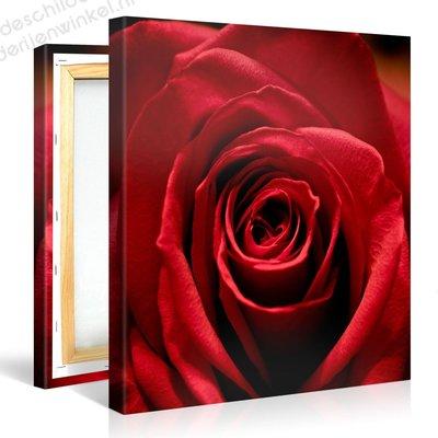 Schilderij Prachtige Rode Roos (80x80cm)