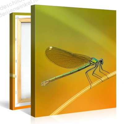 Schilderij Libelle Odonata (80x80cm)