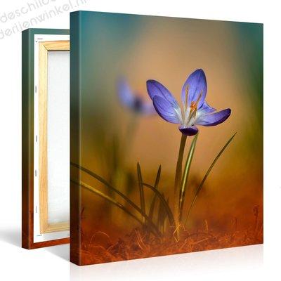 Schilderij Kleine Blauwe Bloem (80x80cm)