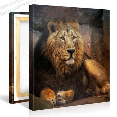 Schilderij Leeuw Momentje (80x80cm)