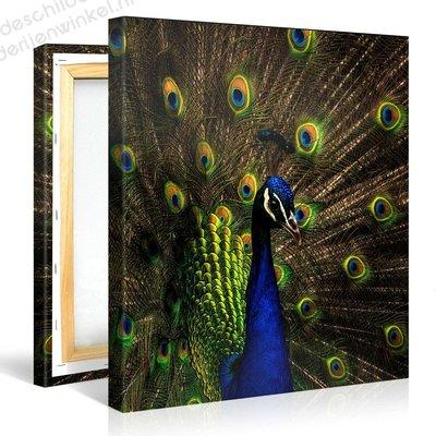 Schilderij Kleurrijke Pauw (80x80cm)