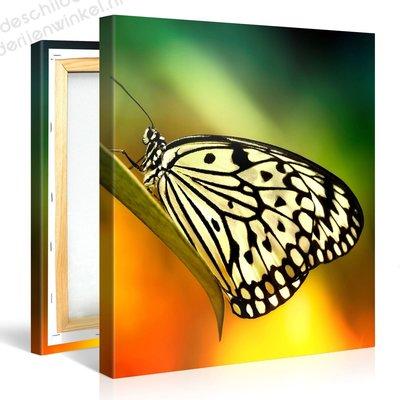 Schilderij Witte Vlinder (80x80cm)