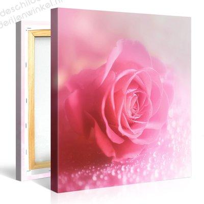 Schilderij Roze Roos Macro (80x80cm)
