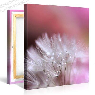 Schilderij Paardebloem Pluis Roze (80x80cm)