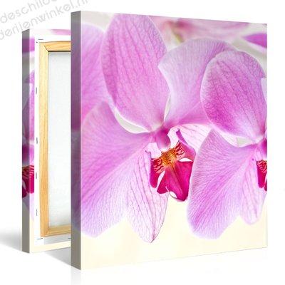 Schilderij Mooie Orchidee (80x80cm)