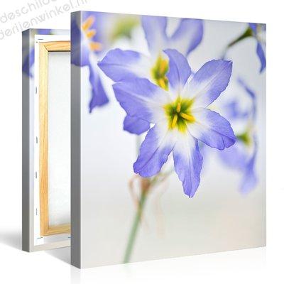 Schilderij Blauwe Gele Bloemen (80x80cm)