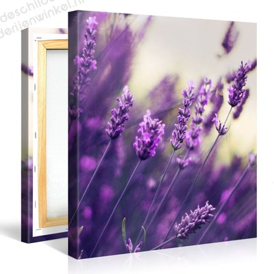 Schilderij Paarse Lavendel (80x80cm)