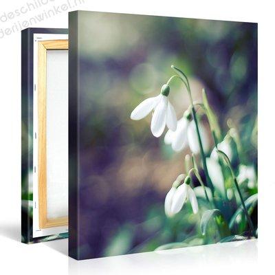 Schilderij Sneeuwklokje Bloemen (80x80cm)
