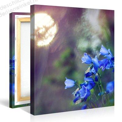 Schilderij Bluebell Bloemen (80x80cm)