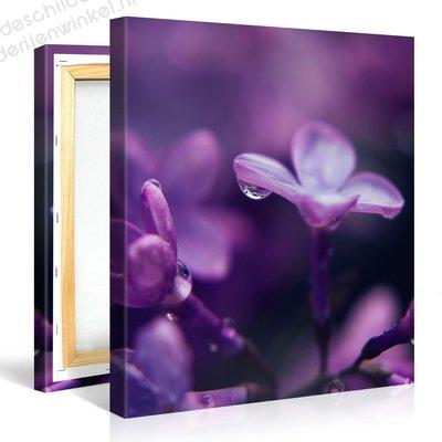 Schilderij Hyacint Focus (80x80cm)