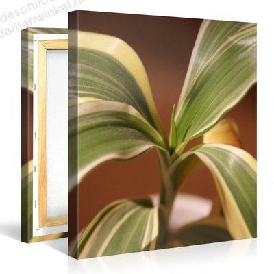 Schilderij Retro Groene Plant (80x80cm)
