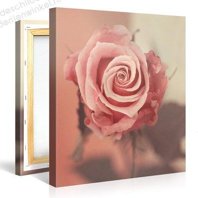 Schilderij Roze Roos (80x80cm)
