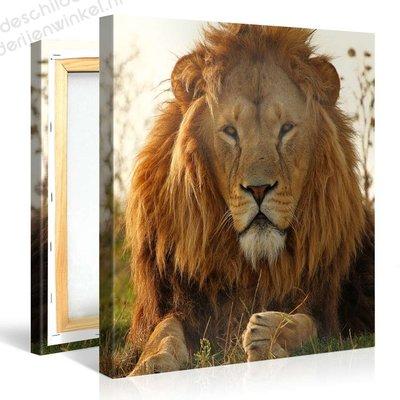 Schilderij Leeuwen Kop (80x80cm)