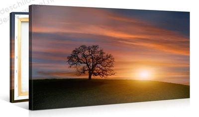Schilderij Boom Zonsondergang (100x50cm)