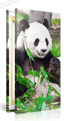 Schilderij Grote Panda 2 (100x50cm)