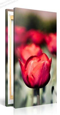 Schilderij Rode Tulpen (50x100cm)