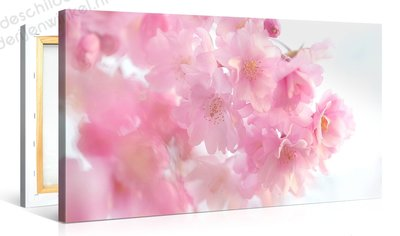 Schilderij Roze Prunusboom (100x50cm)