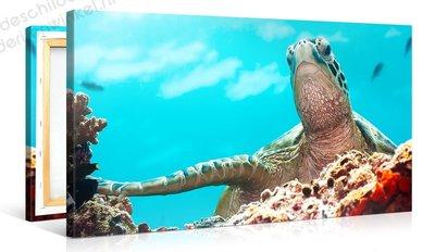 Schilderij Zeeschildpad (100x50cm)