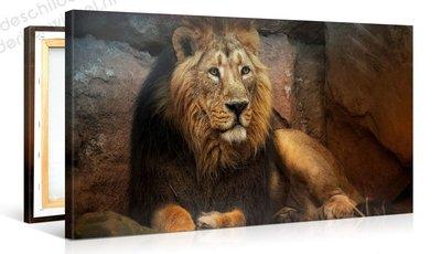 Schilderij Leeuw Momentje (100x50cm)