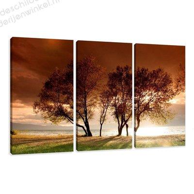 Schilderij Bomen XXL 3-delig (160x90cm)