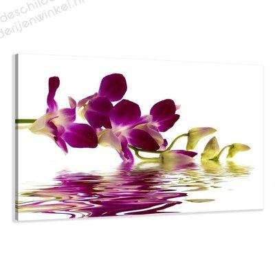 Schilderij Paarse Orchidee (80x60cm)