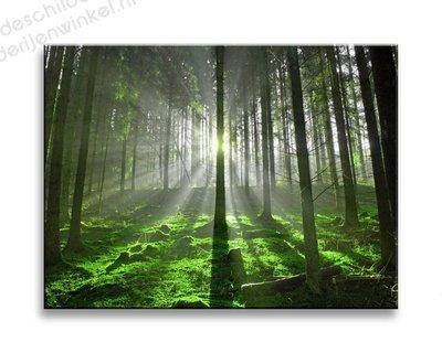 Schilderij Het Groene Bos Klein 3-delig (40x30cm)