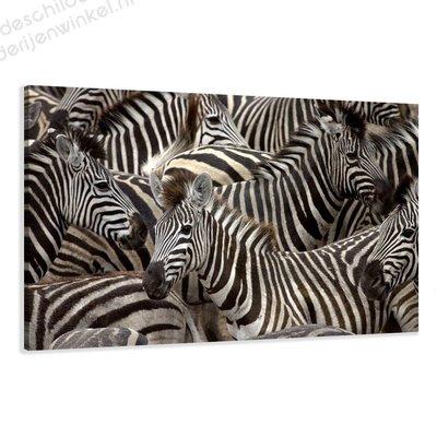 Schilderij Zebras XL (120x80cm)