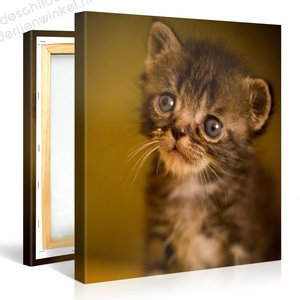 Schilderij Kat (80x80cm)