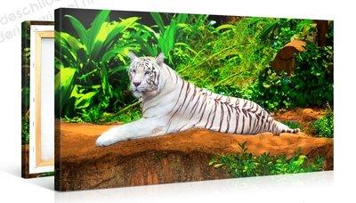 Schilderij Witte Tijger (100x50cm)